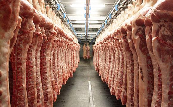Destatis / Schlachtungen: Dickes Plus bei Geflügelfleisch