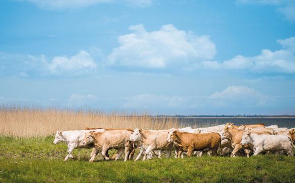 Markenfleisch unter Landprimus wird ausgebaut