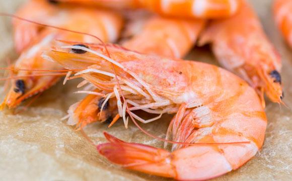 Experten:Nachfrage nach Shrimps aus Deutschland zieht an