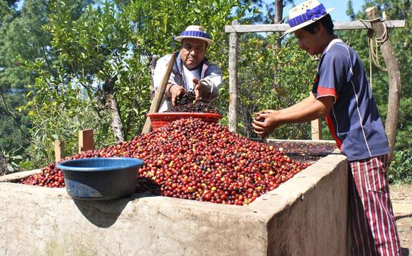 Gepa:Lebensmittel-Sparte wächst