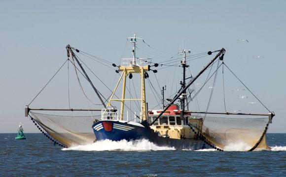 Existenzbedrohung für Ostseefischer