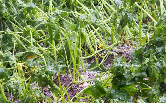 Bauernverband: Schlägt Regenalarm