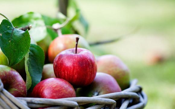 Einsatz für heimisches Obst
