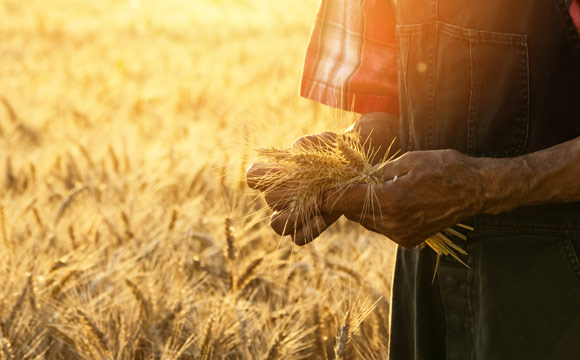 Öko-Landbau: Noch ausbaufähig