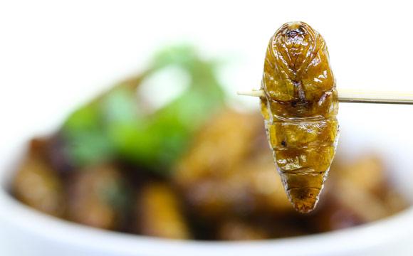 Mehl aus Insekten