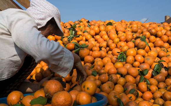 Rewe und Penny führen Fairtrade-Orangensaft ein