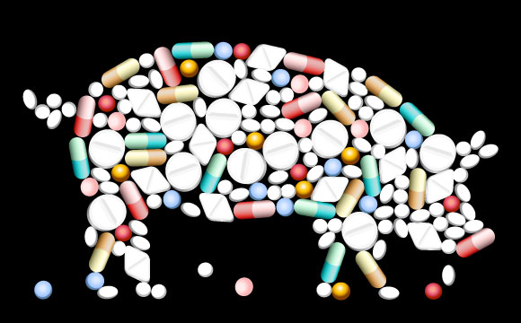 Schweinehaltung: BVerfG soll Haltungsvorschriften prüfen