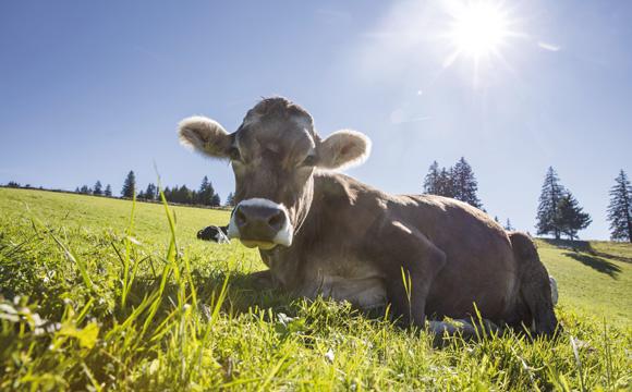 Schweizer Milch wird aufgewertet