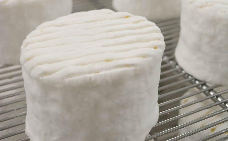 AOP-Käse aus Frankreich