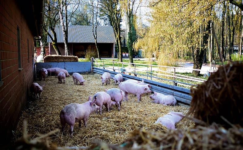 Welche Rolle spielt Tierwohl beim Einkauf?