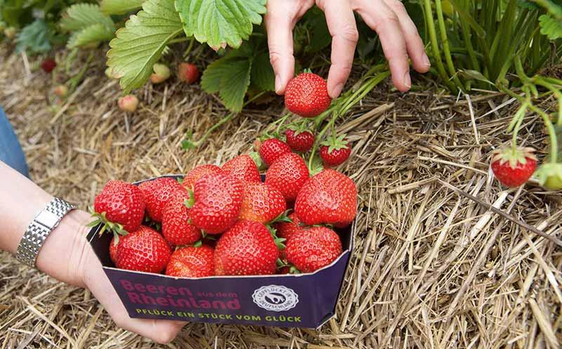 Obst und Gemüse: Auf dem Weg zum Ganzjahres-Produkt