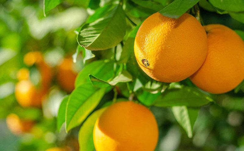 Orangensaft-Eigenmarken zertifiziert