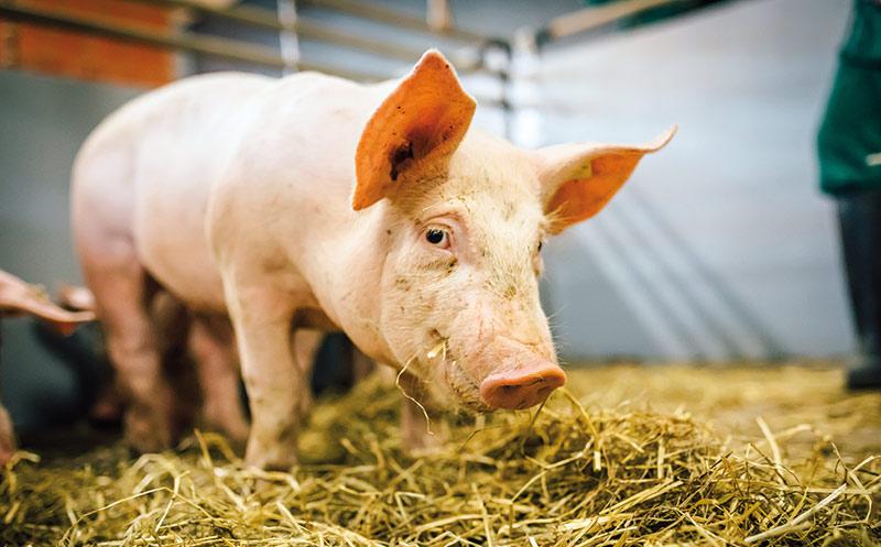 Neue Eigenmarke für mehr Tierschutz