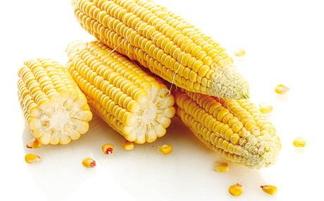 Anbauverbot von Genpflanzen vereinfacht