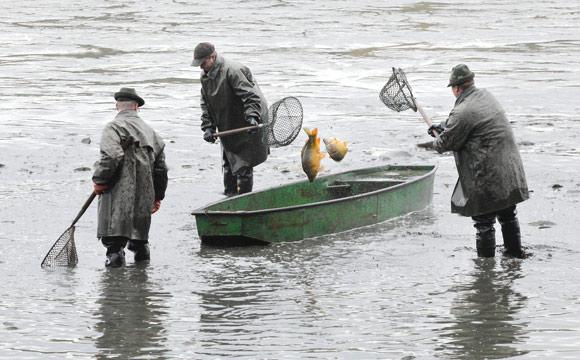 Fischzucht: Aquakultur boomt