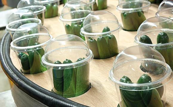 Snackgemüse