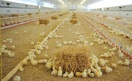 Verzicht auf Gen-Soja in Tierfutter