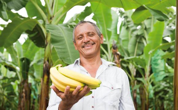 Bananen-Produktion: Angst vor Krankheit