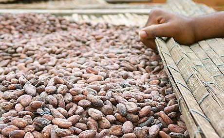 Kakao-Preise belasten Ergebnis