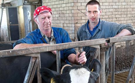 Wellness für Kühe