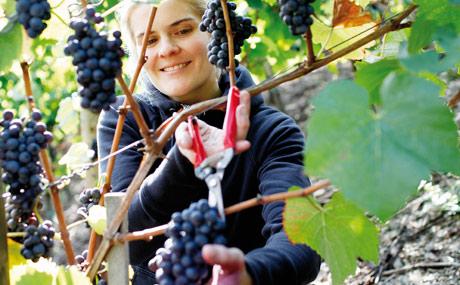 Deutscher Wein Teil 2