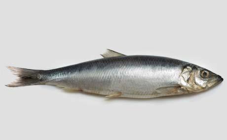 Deutsche essen mehr Seefisch