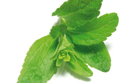 alternative zu zucker co stevia lebensmittel praxis. Black Bedroom Furniture Sets. Home Design Ideas