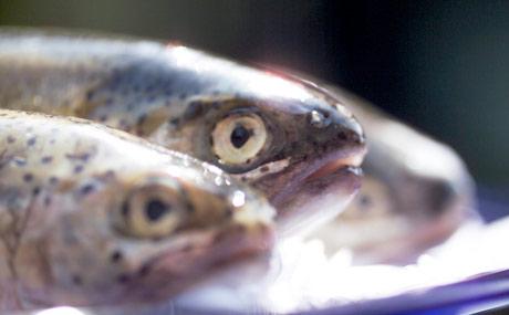 Fischfang:Aktionsplan der Grünen für Meeresschutz