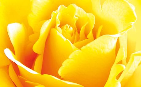 Schnittblumen meist aus EU-Ländern