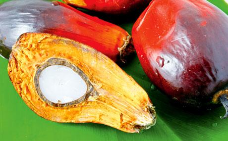 Umstrittener Alleskönner Palmöl