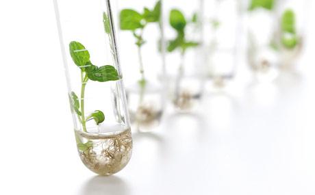 Patente:Saatgut wird zum Objekt der Begierde