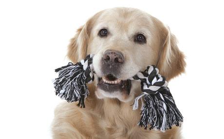 Kundenbindungs-Segment Tierbedarf