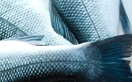 Fleischhof Rasting vermarktet Fisch