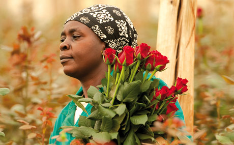 Fairtrade: Blumen immer wichtiger
