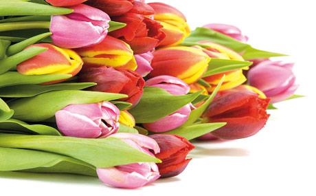 Frucht des Monats:Blühende Geschäfte