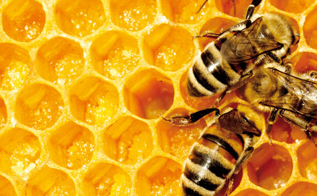 Bienen kämpfen ums Überleben