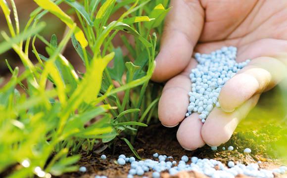 Viele Dünger basieren auf Phosphat. Dieser wird im Tagebau gewonnen. (Quellen: Shutterstock)