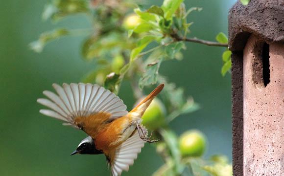 Artenschutz: Streuobstwiesen sind die Heimat vieler verschiedener Tierarten, davon profitieren unsere Vögel.