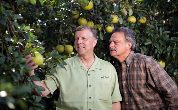 Kritischer Blick: Wie entwickelt sich die Frucht?