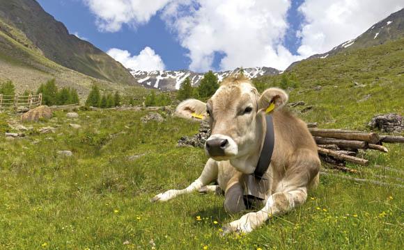 Natürlichkeit und Genuss sind Markenzeichen der österreichischen Lebensmittelwirtschaft.
