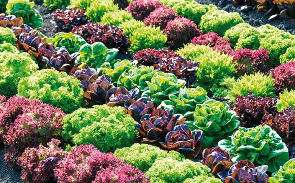 Im Sommer kommt Freilandware aus heimischem Anbau, im Winter aus Südeuropa.