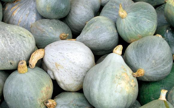 Blue Ballet<br /> Das Aussehen gab ihm seinen Namen: Blue Ballet ist kreiselförmig und trägt eine glatte, graublaue Schale. Schmackhaftes Fruchtfleisch für Suppen, Kuchen, Gratins.