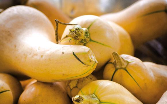 Butternut<br /> Er hat die Form einer Birne, die Schale ist zunächst grün, später beige. Man kann ihn füllen, braten, zu Suppe und Püree verarbeiten. Schmeckt nussig.