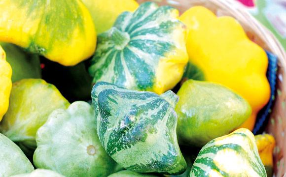 Patissons<br /> Kleine, diskusförmige Kürbisse aus der Provence, meist gelb, weiß oder grün. Verwendung als Salat, gebacken oder als Deko.