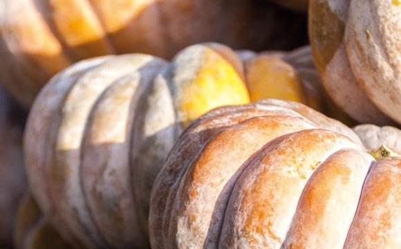 Muskat-Kürbis<br /> Ein Sammelbegriff für mehrere Sorten, die ein Muskat- Aroma aufweisen und daher ideal zu Suppe oder Püree verarbeitet werden können.