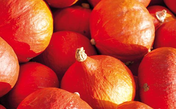 Hokkaido<br /> Der Trendsetter unter den Kürbissen. Beliebt wegen seiner handlichen Größe, des feinen Aromas und der leuchtenden Farbe. Auch zum Dekorieren.