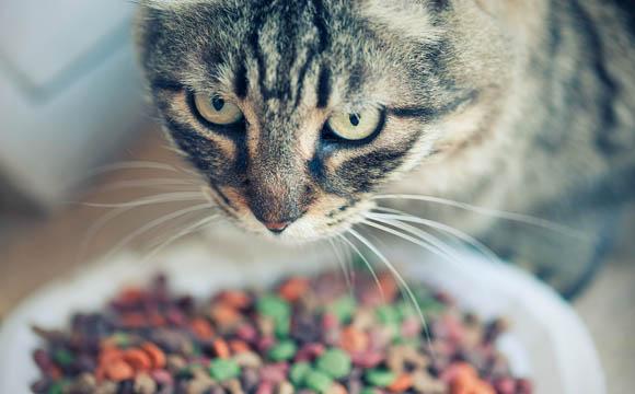 Nahrung für Heimtiere