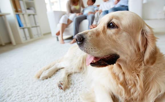 In 16 Prozent der Haushalte leben fast 8 Mio. Hunde.