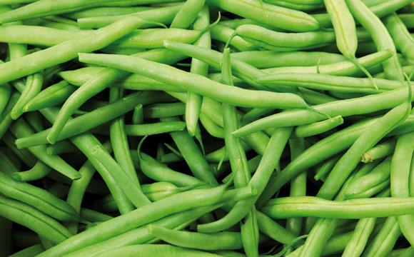 Grüne Bohnen<br /> Busch- oder Stangenbohnen, zählen zum Gemüse. Auch sie sind roh nicht genießbar. Nach dem Blanchieren kurz in Eiswasser geben, erhält die Farbe.