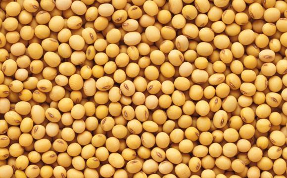 Gelbe Erbsen<br /> kochen mehlig und sind ideal zur Zubereitung von Suppen. Je größer die Form der Erbsen, desto mehliger wird die Suppe.